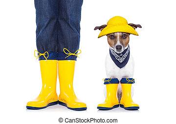 dog, gereed, wandeling