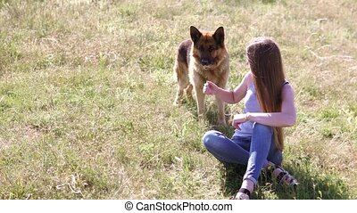 dog German Shepherd female schools - woman beautiful rentals...