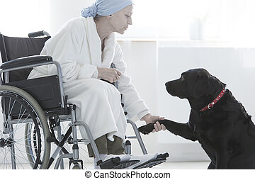 Dog giving paw disabled woman
