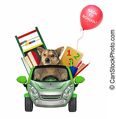Dog goes to school by car 2
