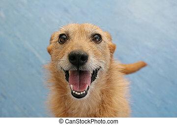 dog, grijns, vrolijke