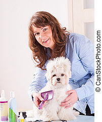 Dog grooming - Smiling woman grooming a dog purebreed...