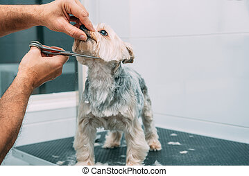 Dog grooming session