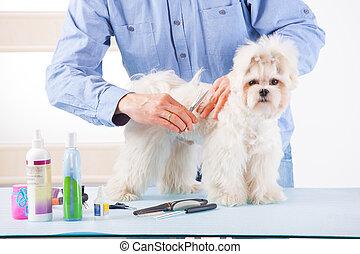 Dog grooming - Smiling man grooming a dog purebreed maltese...