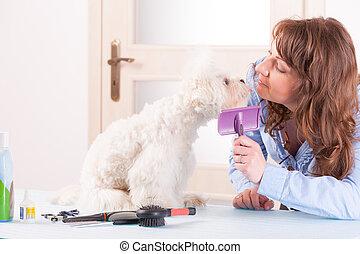 Dog grooming - Smiling woman grooming a dog purebred maltese...