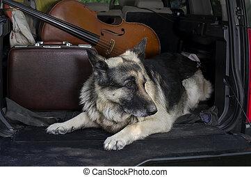 Dog Guarding A Car
