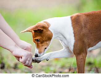 Dog guesses which hand of owner hides treats - Concept: ...
