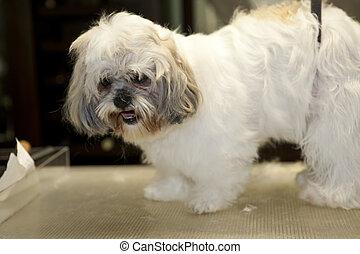 dog hairdresser