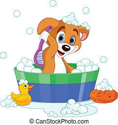 Dog having a  bath - Very cute  dog having a soapy bath