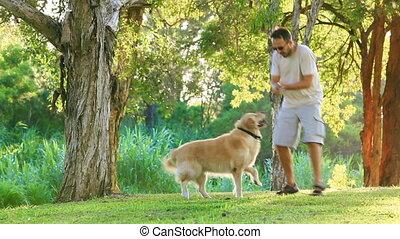 Dog having fun and fetching a stick