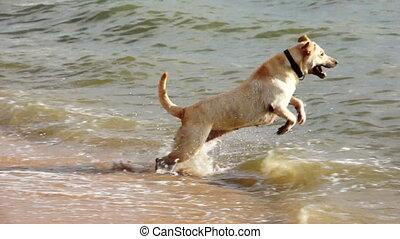 Dog Having Some Beach Fun.