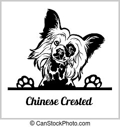 dog head, Chinese Crested breed, black and white illustration