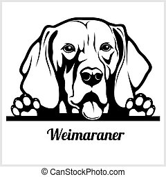 dog head, Weimaraner breed, black and white illustration