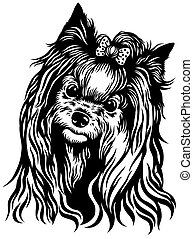 yorkshire terrier - dog head , yorkshire terrier breed ,...