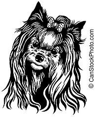 yorkshire terrier - dog head , yorkshire terrier breed ,...