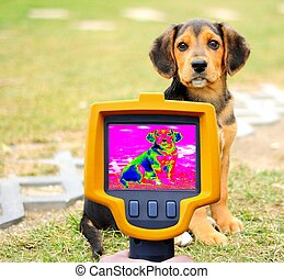 Dog Heat Loss Detection - Dog Heat Loss Recording with...