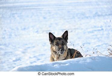 Dog Hiding In Snow