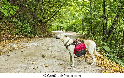 Dog hiker in a forest