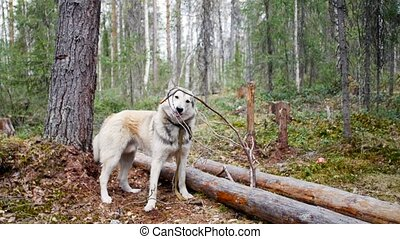 Dog holding a stick in his mouth in the forest on the background