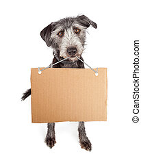 Dog Holding Blank Cardboard Sign