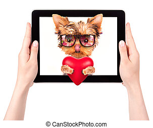 dog holding heart with tablet computer - valentine puppy dog...