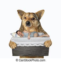 Dog holds a sleeping man