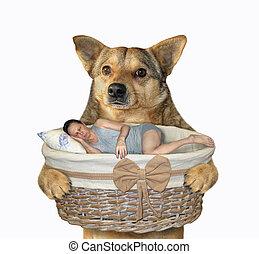 Dog holds basket with sleeping man