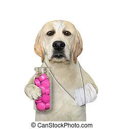 Dog holds bottle of red pills