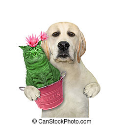 Dog holds cat cactus in pink pot