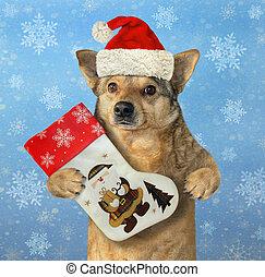 Dog holds Christmas stocking 2