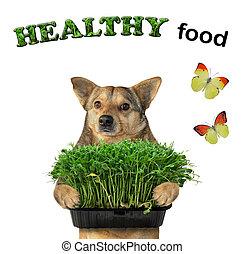 Dog holds microgreens box 3