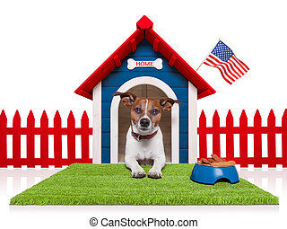 dog in house with american flag and bowl full of food