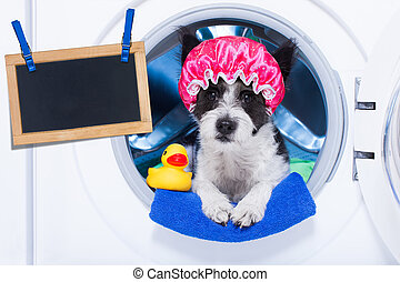 dog housework chores - dog inside a washing machine ready to...