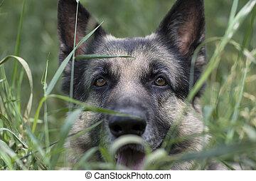 Dog Hunting