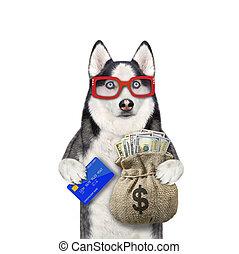 Dog husky with credit card and dollars 2