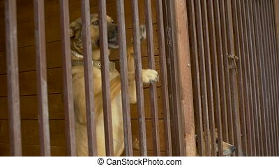 Dog in a aviary at a dog kennel