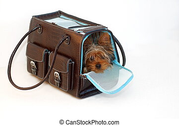 Dog in a Bag - Yorkshire Terrier looking out of a brown and...