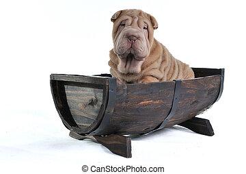 Dog in a Barrel