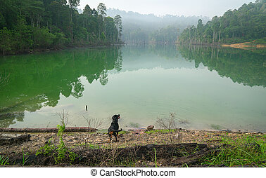 Dog in a beautiful lake and forest landscape.