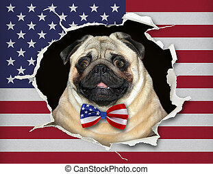 Dog in a bow tie behind the us flag 2