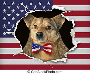 Dog in a bow tie behind the us flag