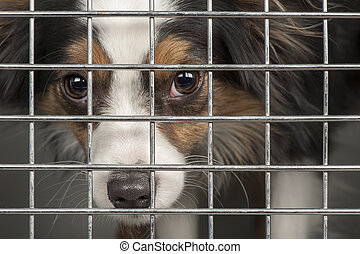 Dog in a cage - Closeup of a dog looking through the bars of...