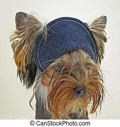 Dog in a cap