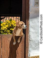 Dog in a Door