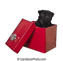 Dog in a gift box