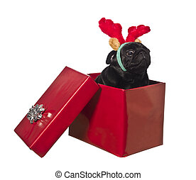 Dog in a gift box with reindeer antlers