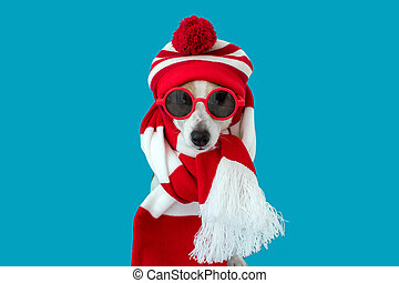 Dog in a hat and a scarf