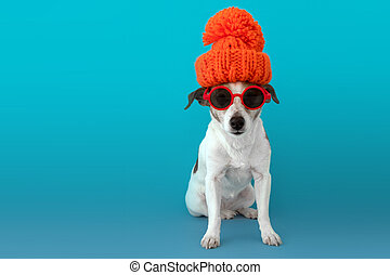 Dog in a hat