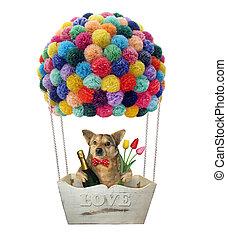 Dog in a hot air balloon