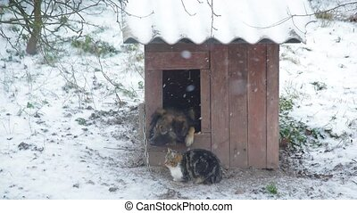 Dog in a kennel with cat sitting nearby in winter. It is...